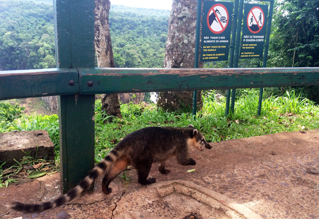 Водопады Игуасу в Бразилии отзыв о поездке на ChileTravelMag-14