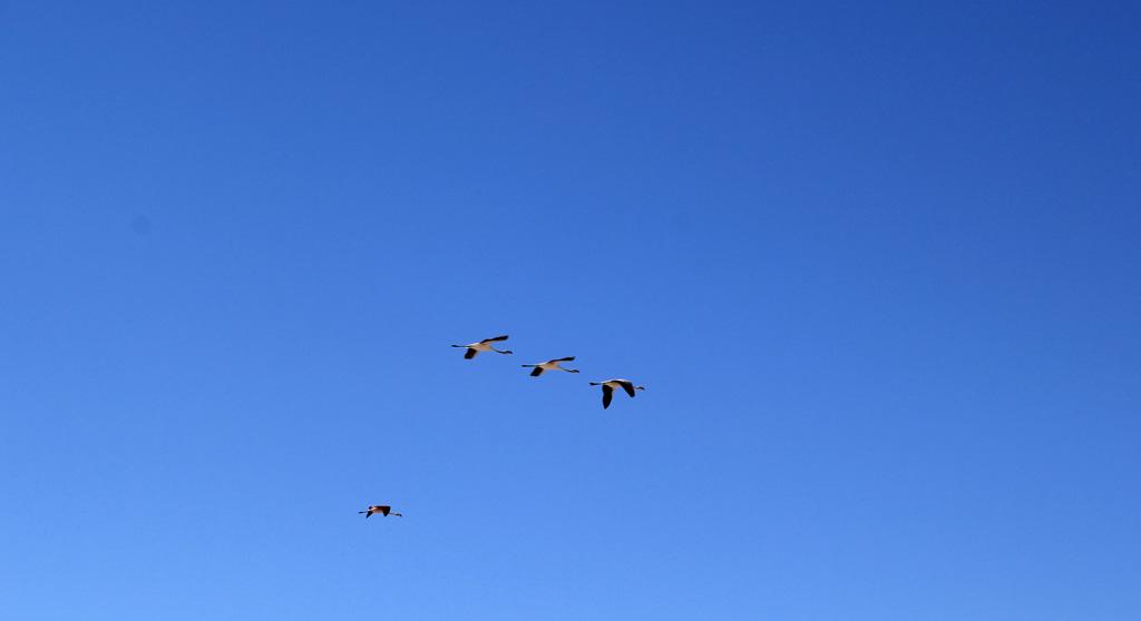 Лагуна Чакса пустыня Атакама Чили отзыв о поездке в блоге о путешествиях по Чили ChileTravelMAg-13