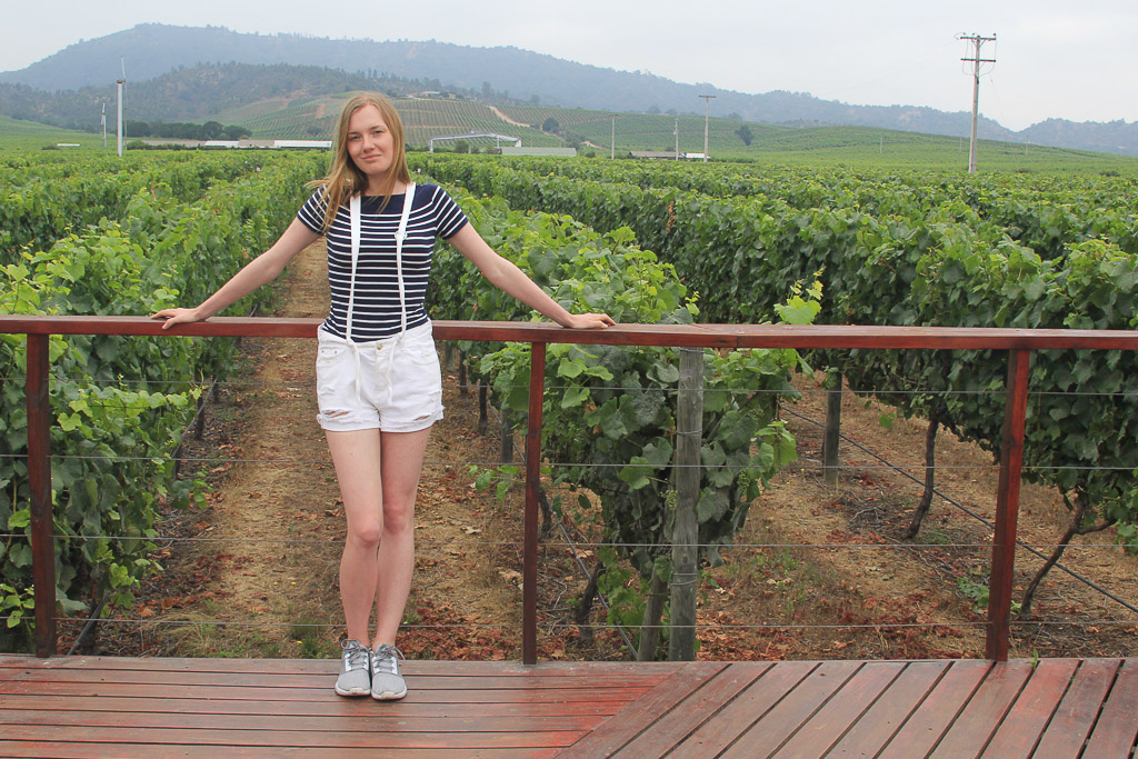 Винодельня Чили Viña Casas del Bosque долина Касабланка, отзыв о поездке-13