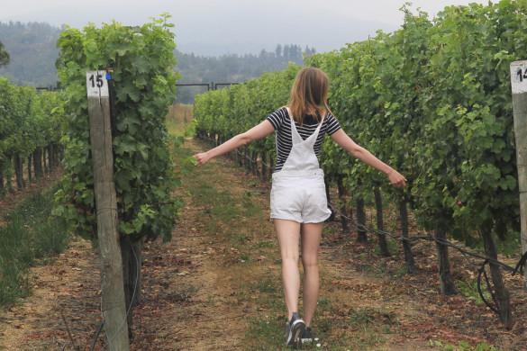 Винодельня Чили Viña Casas del Bosque долина Касабланка, отзыв о поездке-9
