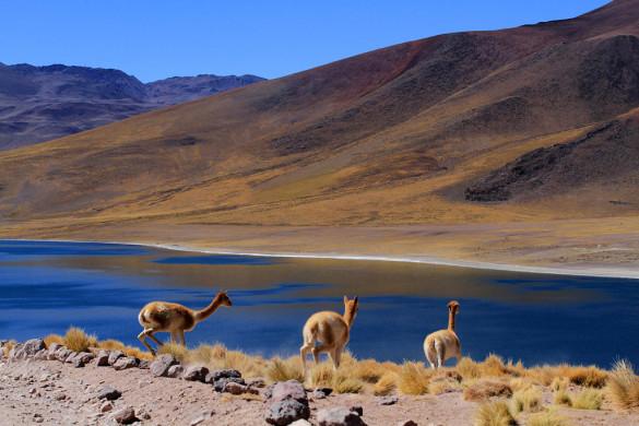 Лагуна Мисканти Атакама, Чили, отзыв в блоге о путешествиях по Чили ChileTravelMag-19