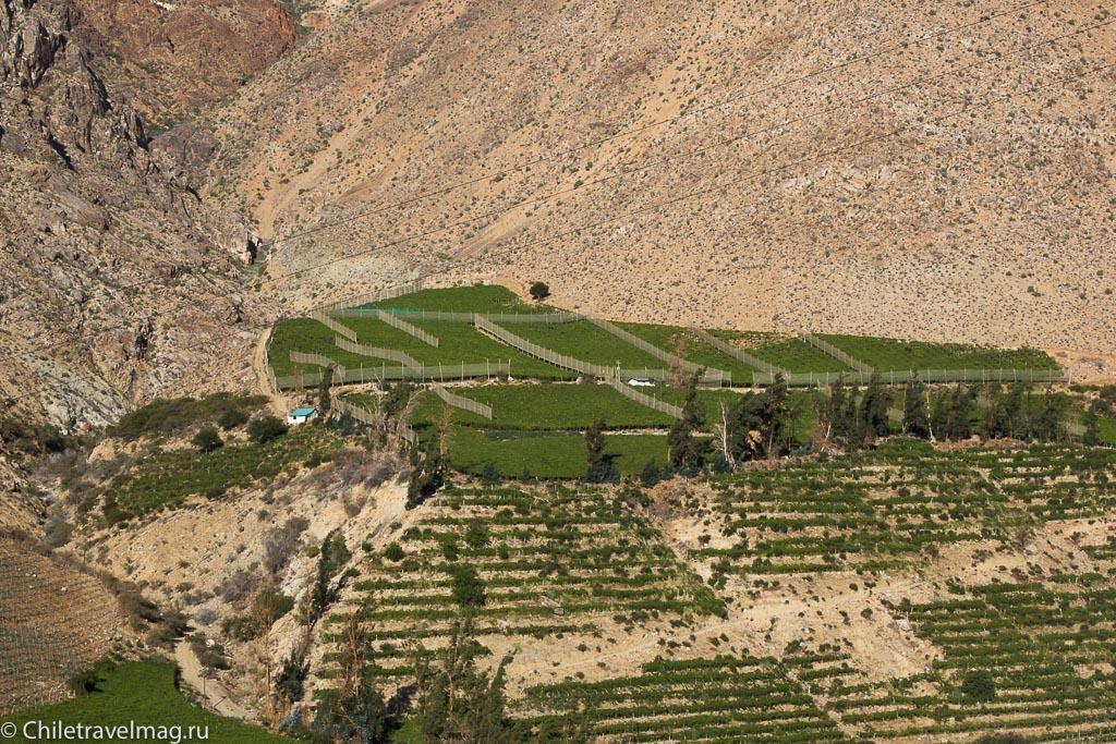 Долина Эльки в Чили, Valle de Elqui Chile, отзыв о поездке-15