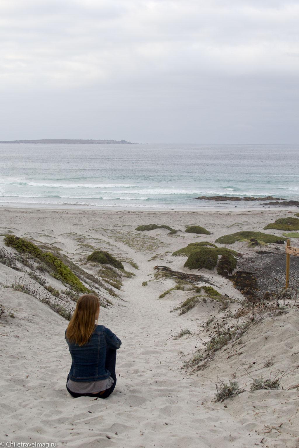 Поездка в Punta de Choros Chile-2