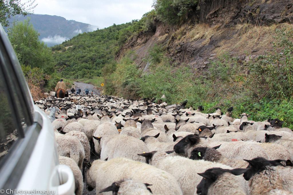 Поездка на машине по югу Чили, Romeral, Los Queñes-11