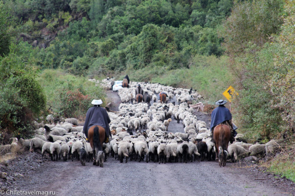 Поездка на машине по югу Чили, Romeral, Los Queñes-14