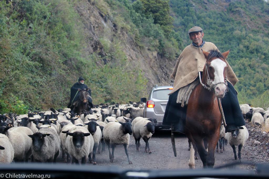 Поездка на машине по югу Чили, Romeral, Los Queñes-8