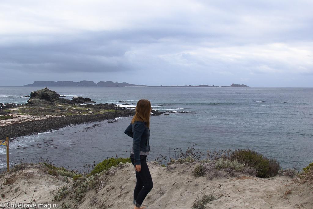 Punta de Choros, Chile, поездка в Пунта-де-Чорос в Чили, отзыв-13
