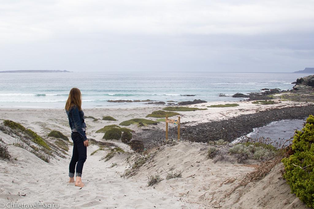 Punta de Choros, Chile, поездка в Пунта-де-Чорос в Чили, отзыв-16