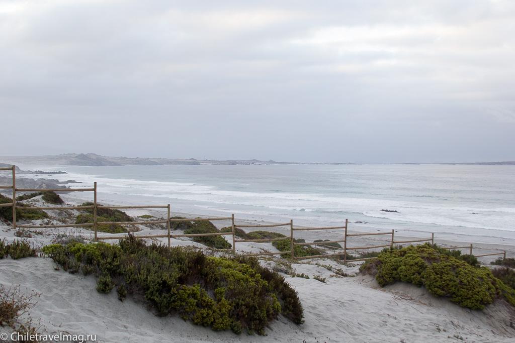 Punta de Choros, Chile, поездка в Пунта-де-Чорос в Чили, отзыв-5