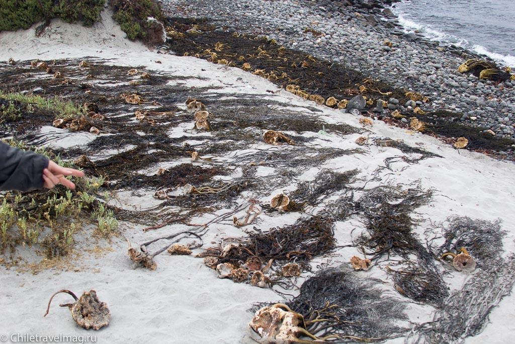 Punta de Choros, Chile, поездка в Пунта-де-Чорос в Чили, отзыв-8