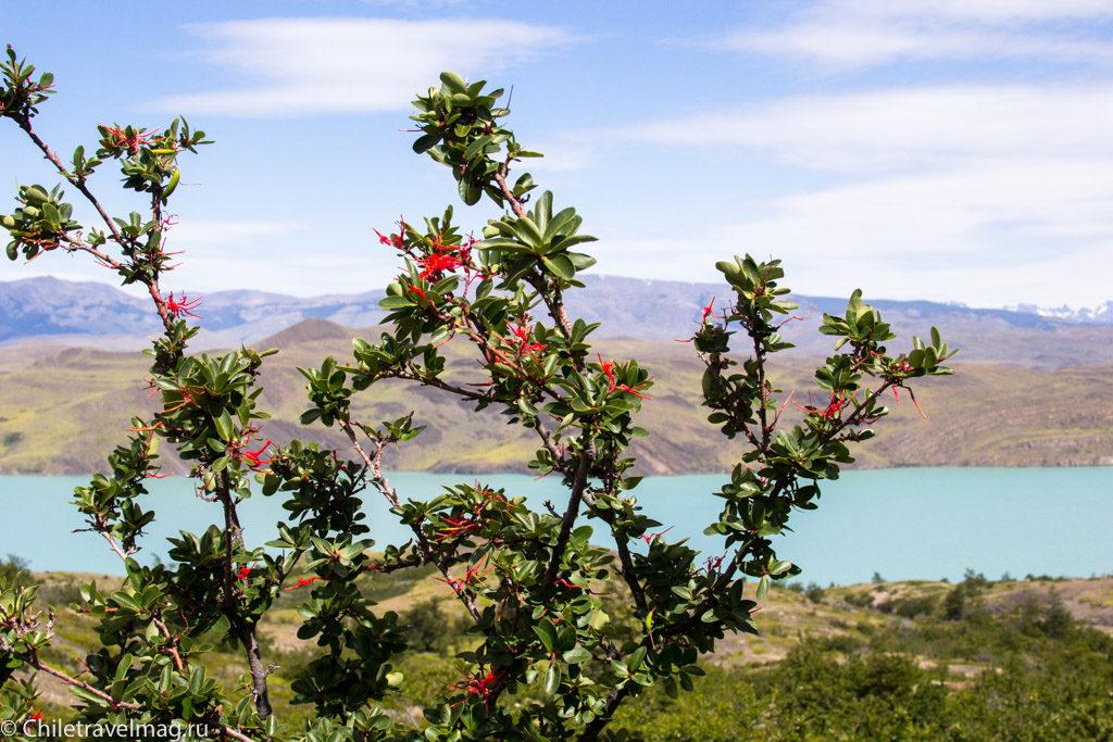Чили Патагония,Торрес-дель-Пайне, Треккинг по маршруту W