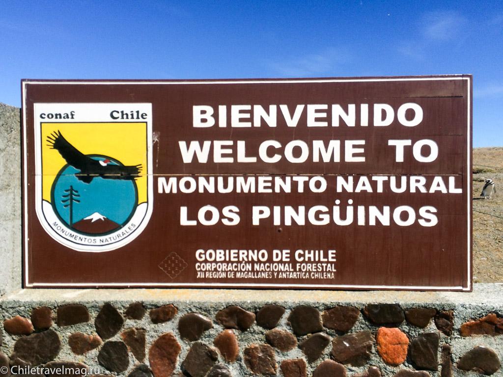 Остров Магдалена Патагония Чили, пингвины