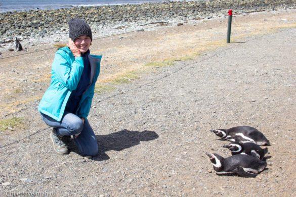 Пингвины на острове Магдалена в Чили