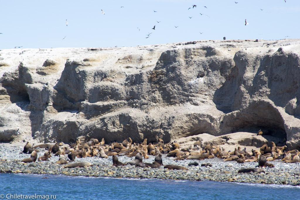 как доехать на остров в магеллановом проливе в Чили