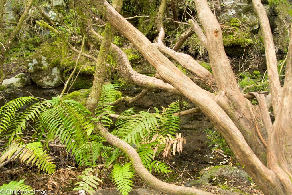 arturo-perez-rozales-park-saltos-petrohue-puerto-varas-chiletravelmag-blog-21