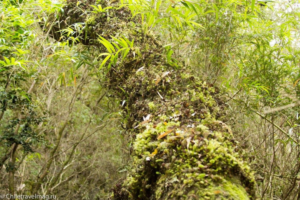 arturo-perez-rozales-park-saltos-petrohue-puerto-varas-chiletravelmag-blog-22