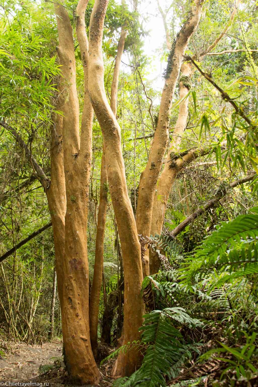 arturo-perez-rozales-park-saltos-petrohue-puerto-varas-chiletravelmag-blog-34