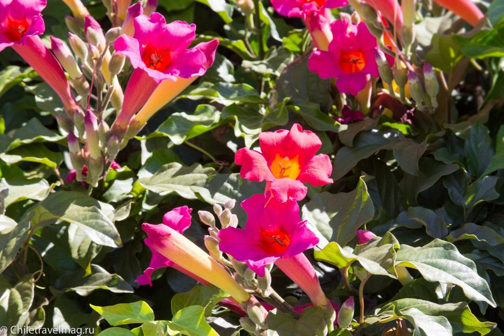 cantuna-flower