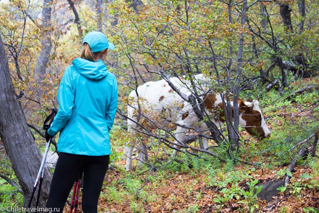 altos-de-lircay-trekking-16