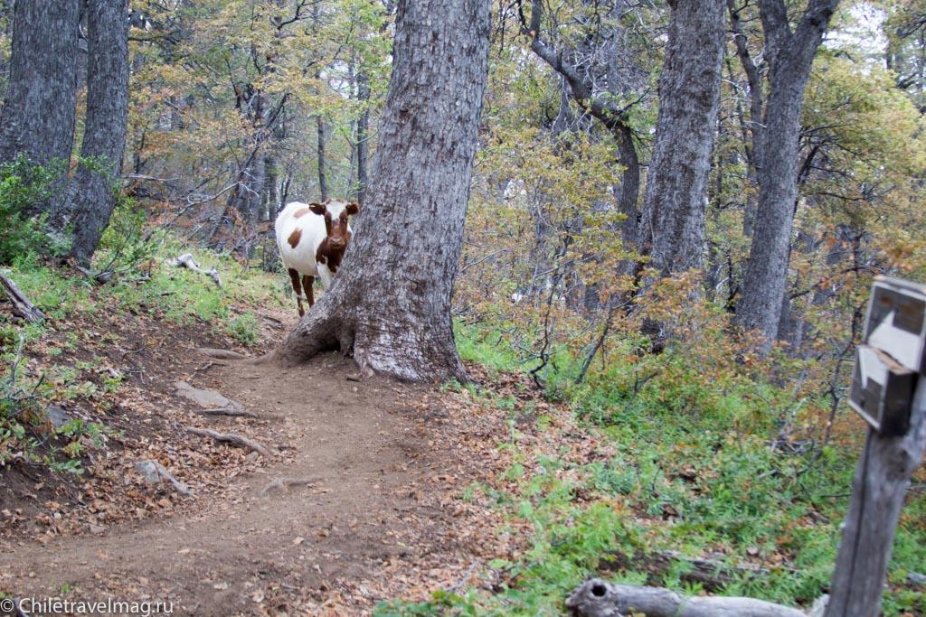 altos-de-lircay-trekking-19