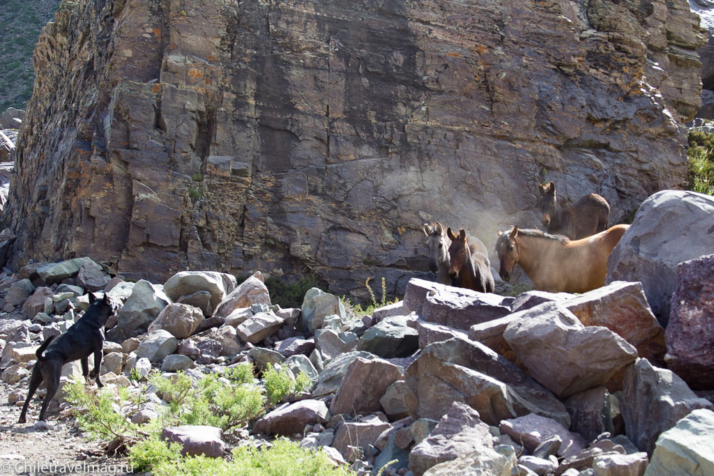 glaciar-el-morado-cajon-del-maipo-chile-%d0%bb%d0%b5%d0%b4%d0%bd%d0%b8%d0%ba%d0%b8-%d1%87%d0%b8%d0%bb%d0%b8-8