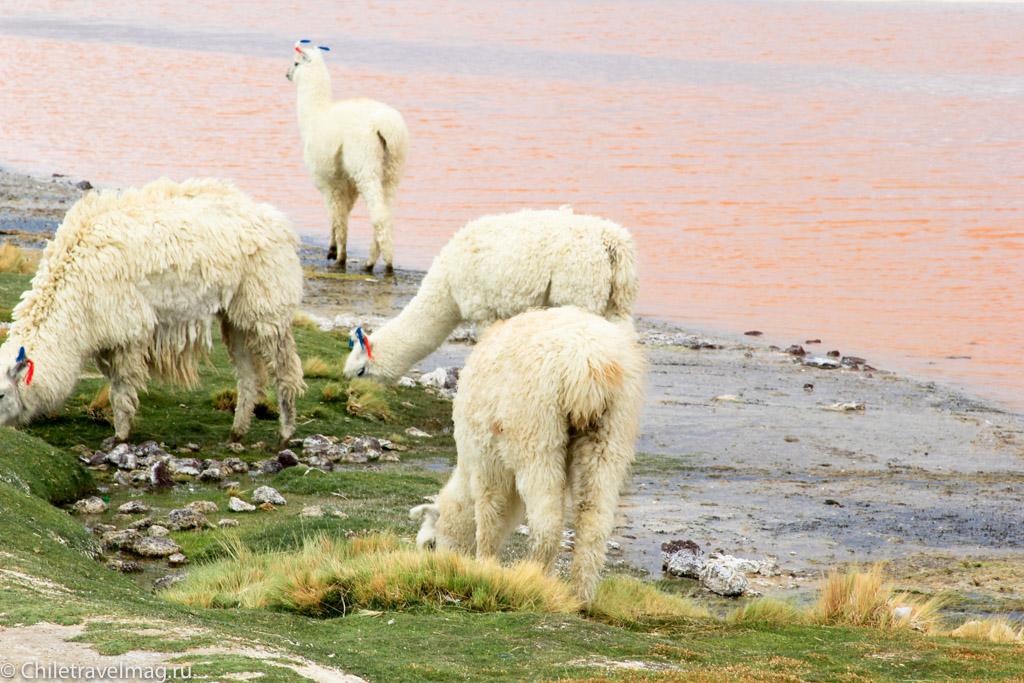 Поездка в Боливию Лагуна Колорада отзыв в блоге-1