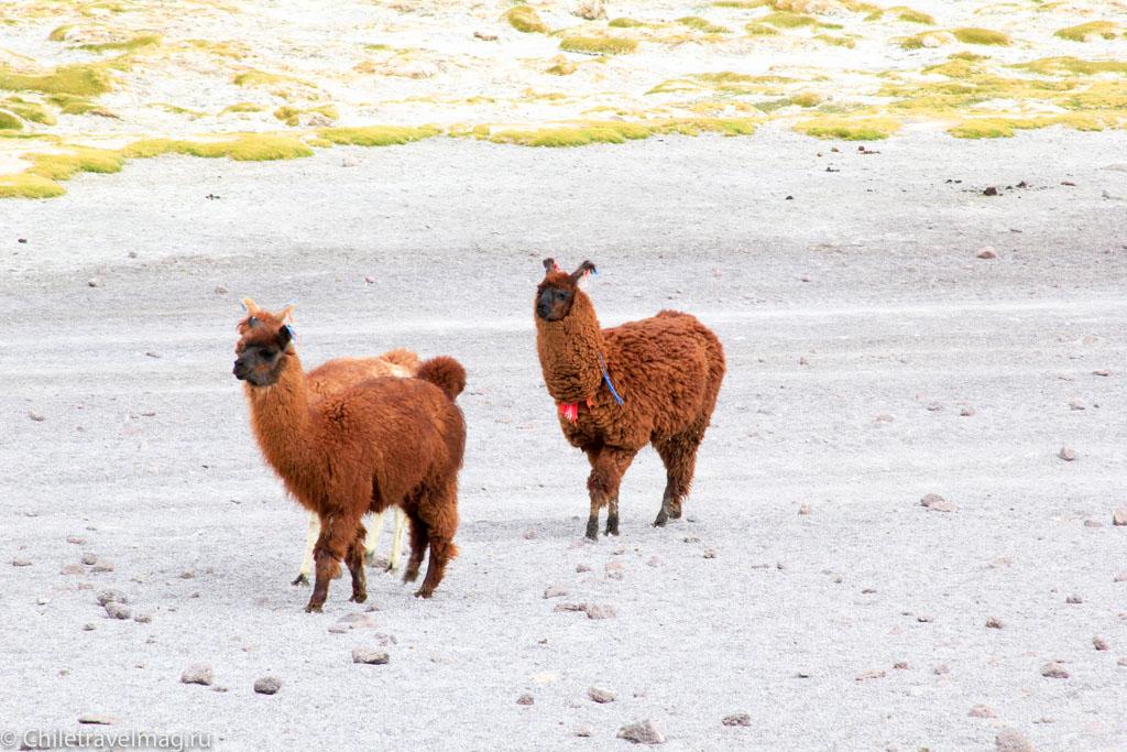 Поездка в Боливию Лагуна Колорада отзыв в блоге-12
