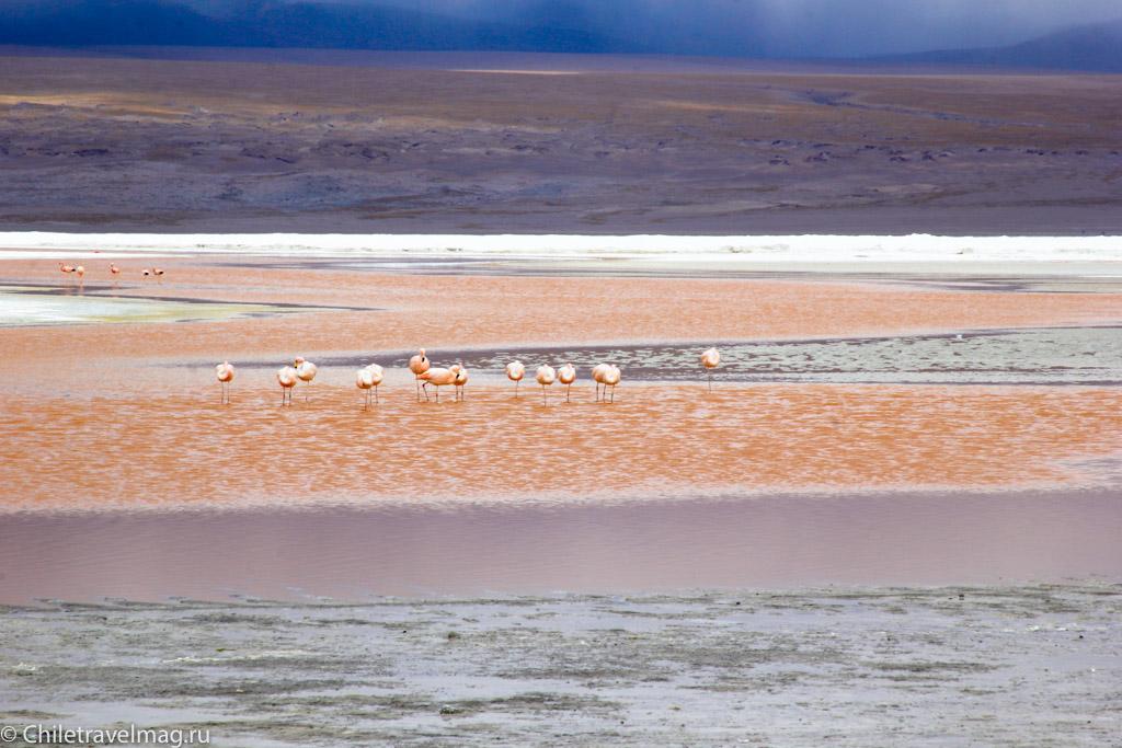 Поездка в Боливию Лагуна Колорада отзыв в блоге-14