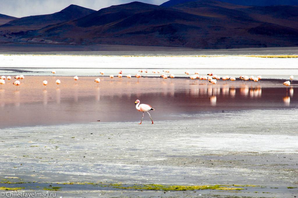 Поездка в Боливию Лагуна Колорада отзыв в блоге-15