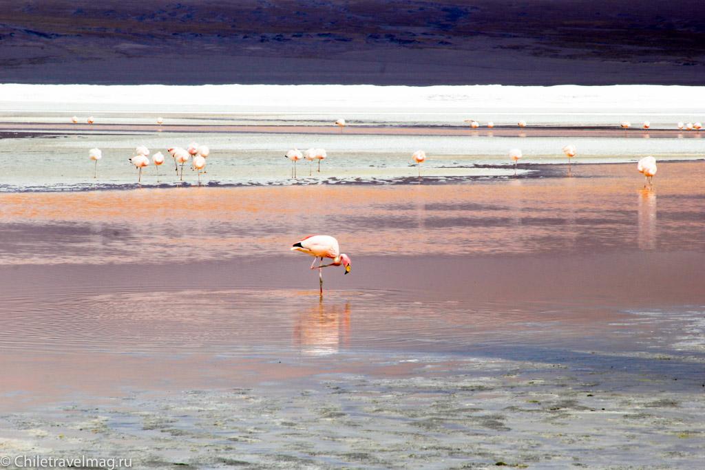 Поездка в Боливию Лагуна Колорада отзыв в блоге-16