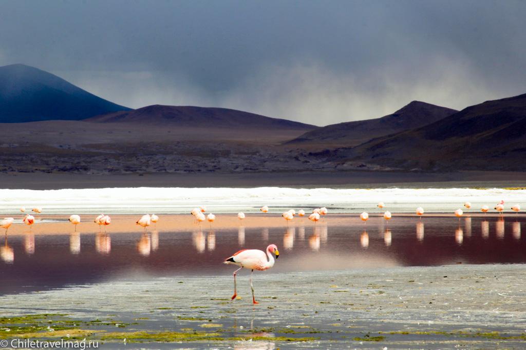 Поездка в Боливию Лагуна Колорада отзыв в блоге-17