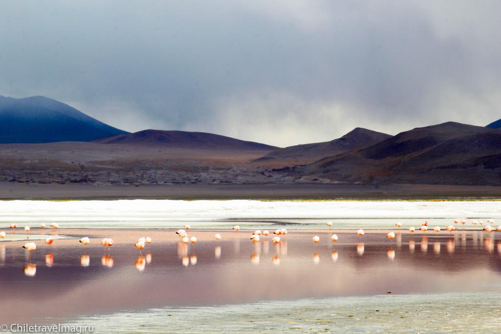 Поездка в Боливию Лагуна Колорада отзыв в блоге-19