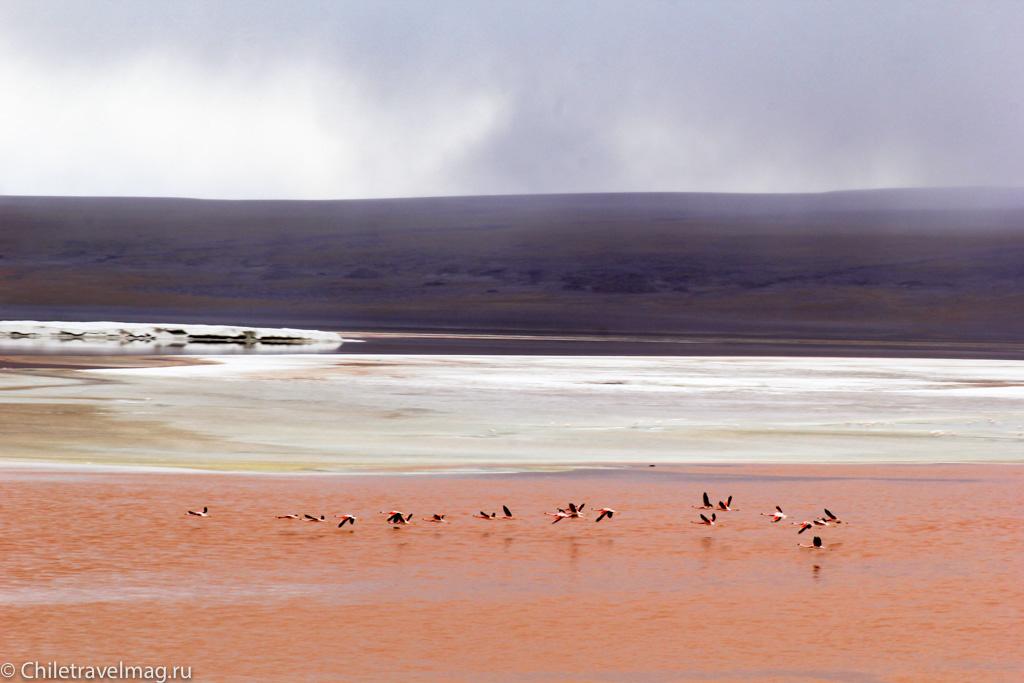 Поездка в Боливию Лагуна Колорада отзыв в блоге-27