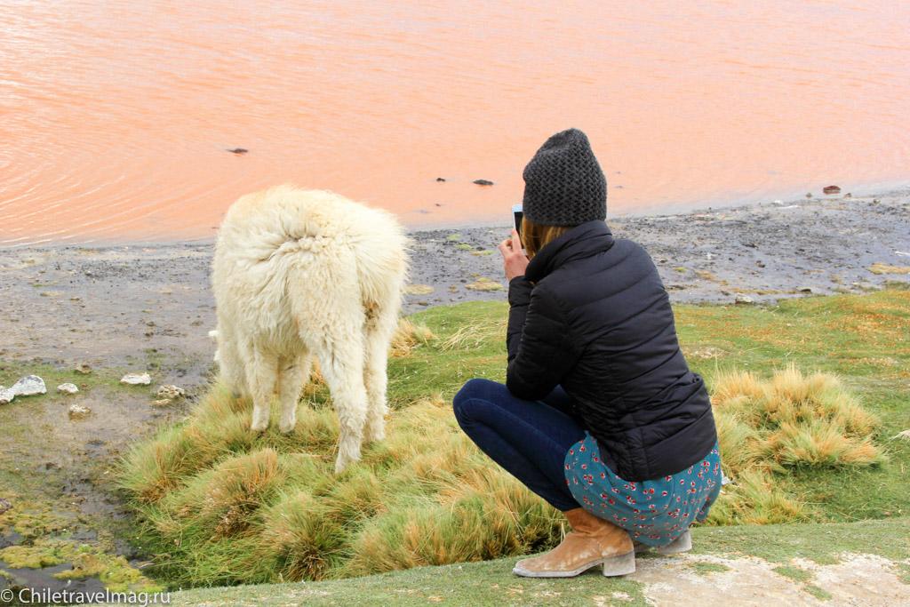 Поездка в Боливию Лагуна Колорада отзыв в блоге-3