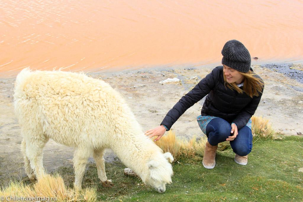 Поездка в Боливию Лагуна Колорада отзыв в блоге-6