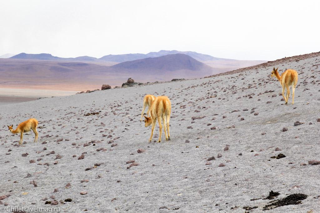 Поездка в Боливию Лагуна Колорада отзыв в блоге-9