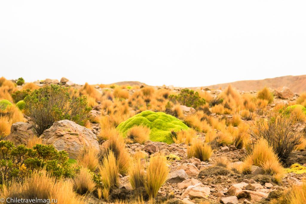 Поездка в Боливию, Тур в Боливию, отзыв в блоге, долина Лас Рокас в Боливии-1