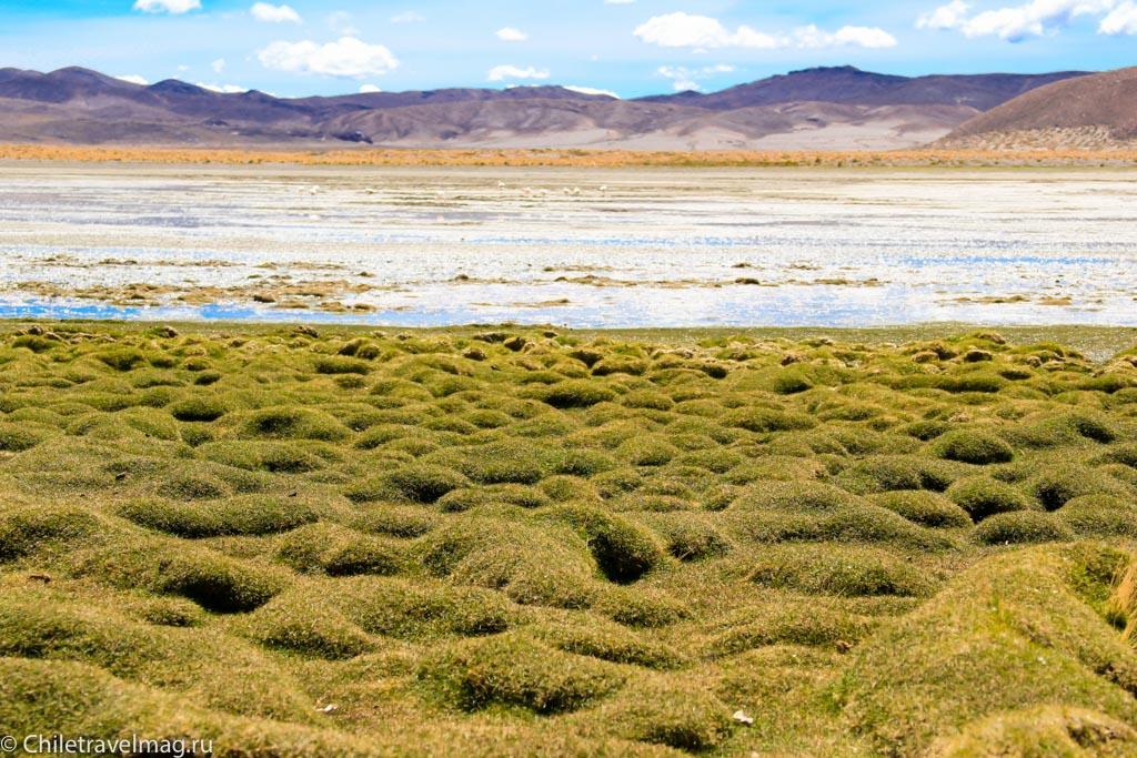 Поездка в Боливию, Тур в Боливию, отзыв в блоге, долина Лас Рокас в Боливии-16