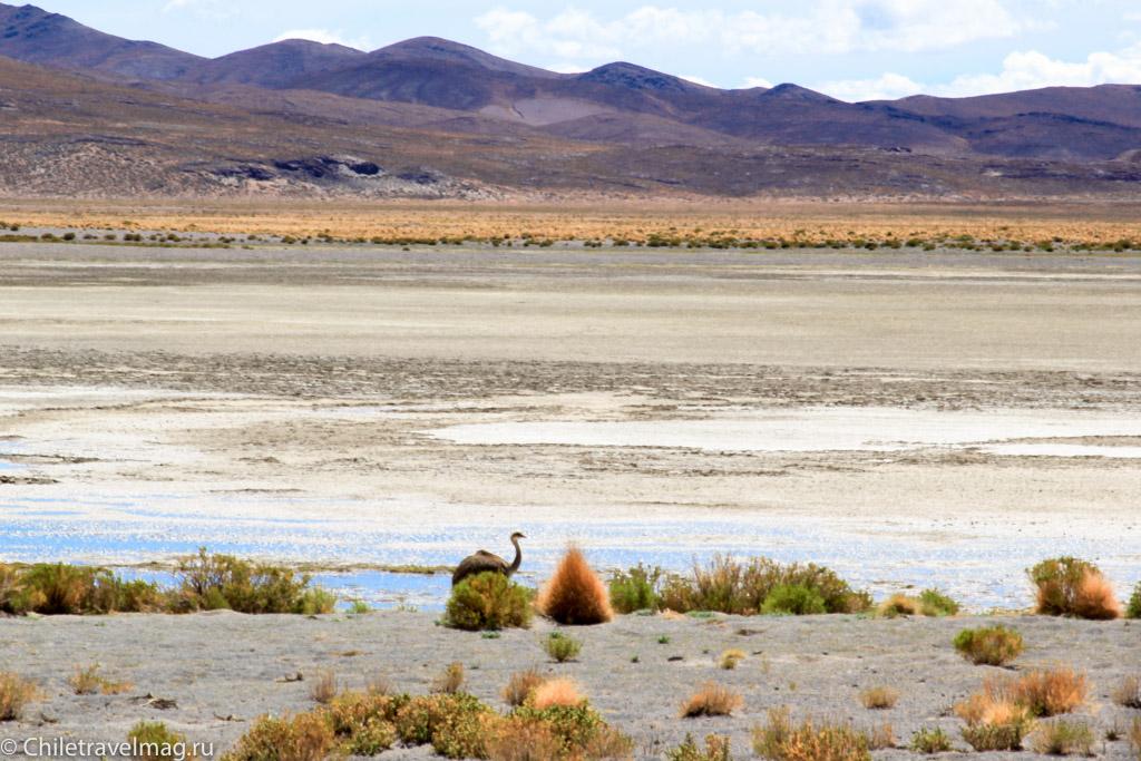Поездка в Боливию, Тур в Боливию, отзыв в блоге, долина Лас Рокас в Боливии-19