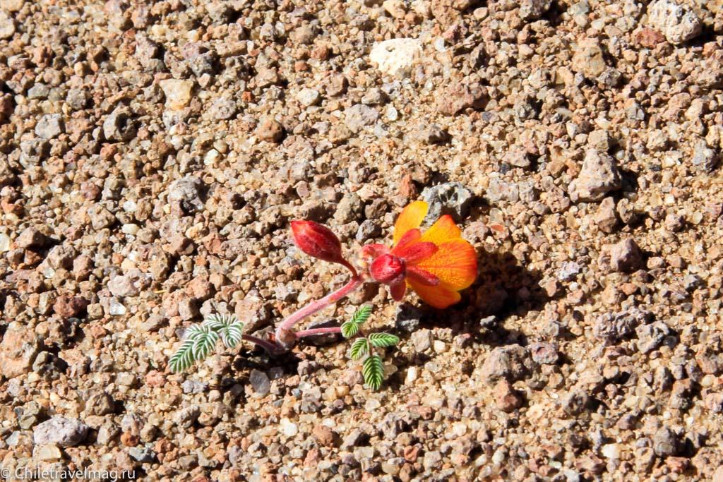Поездка в Боливию, Тур в Боливию, отзыв в блоге, долина Лас Рокас в Боливии-7