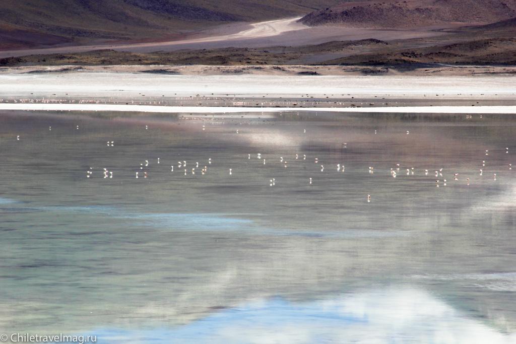 Тур в Боливию-лагуны-альтиплано-Боливия-отчет-в-блоге-Chiletravelmag-10