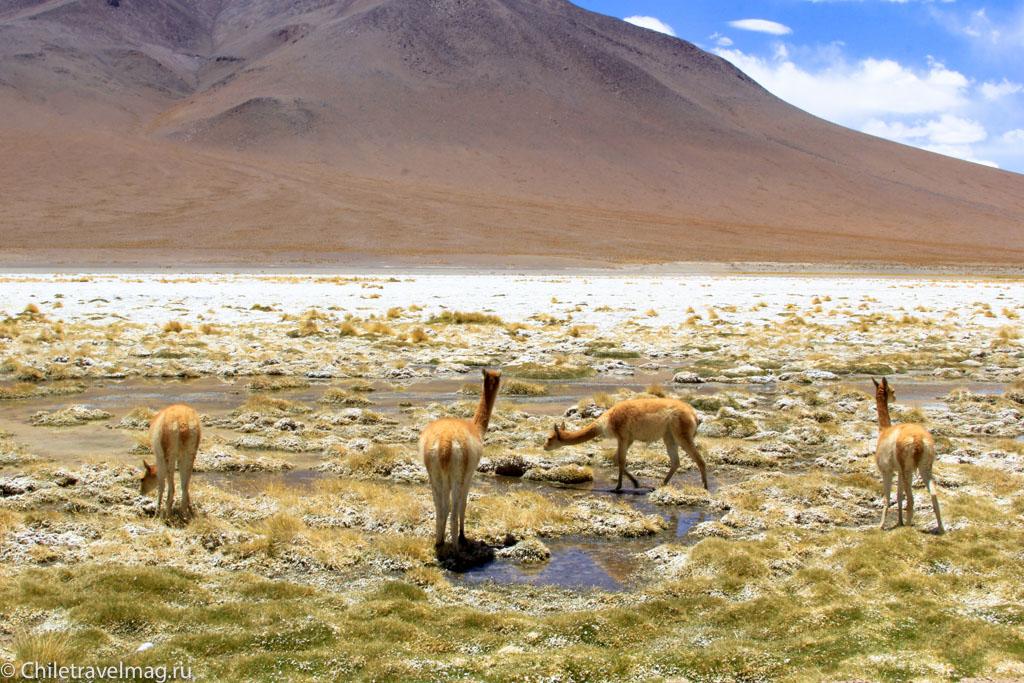 Тур в Боливию-лагуны-альтиплано-Боливия-отчет-в-блоге-Chiletravelmag-39