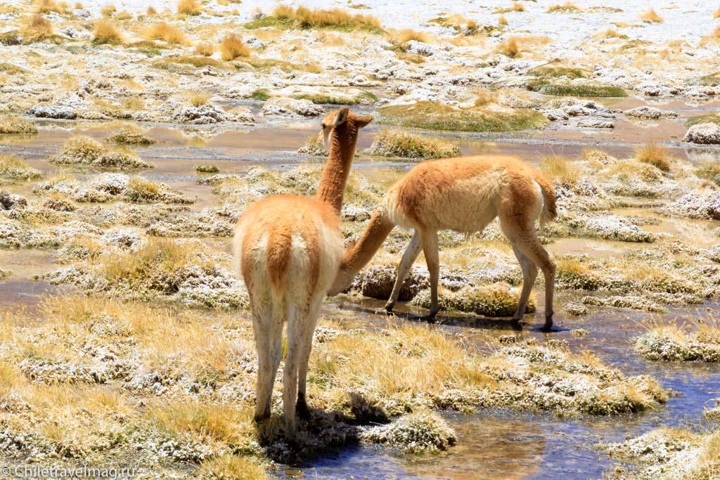 Тур в Боливию-лагуны-альтиплано-Боливия-отчет-в-блоге-Chiletravelmag-40