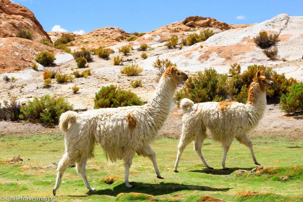 Valle de las Rocas поездка в Боливию отчет в блоге Chiletravelmag.ru -1