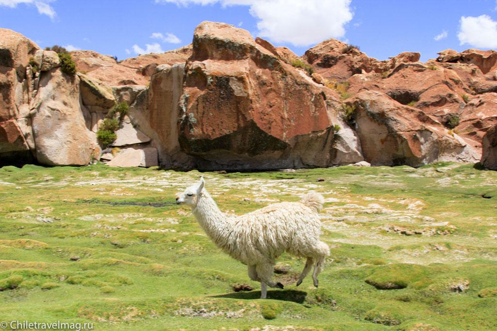 Valle de las Rocas поездка в Боливию отчет в блоге Chiletravelmag.ru -15