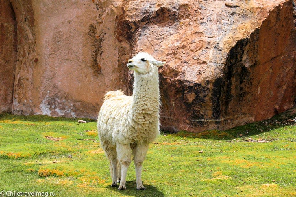 Valle de las Rocas поездка в Боливию отчет в блоге Chiletravelmag.ru -16