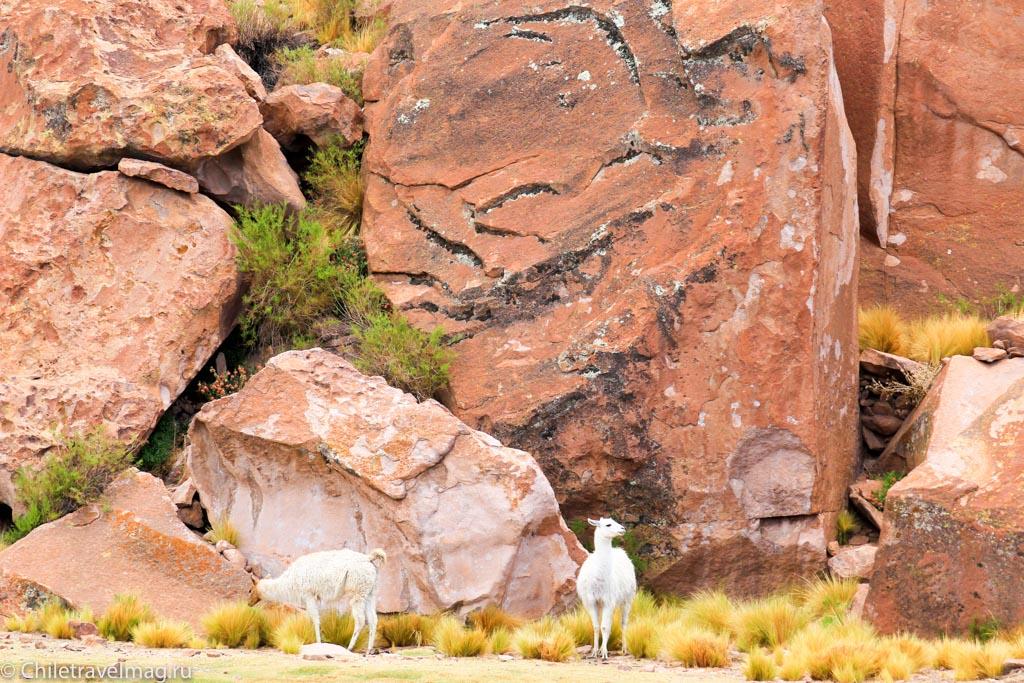 Valle de las Rocas поездка в Боливию отчет в блоге Chiletravelmag.ru -17