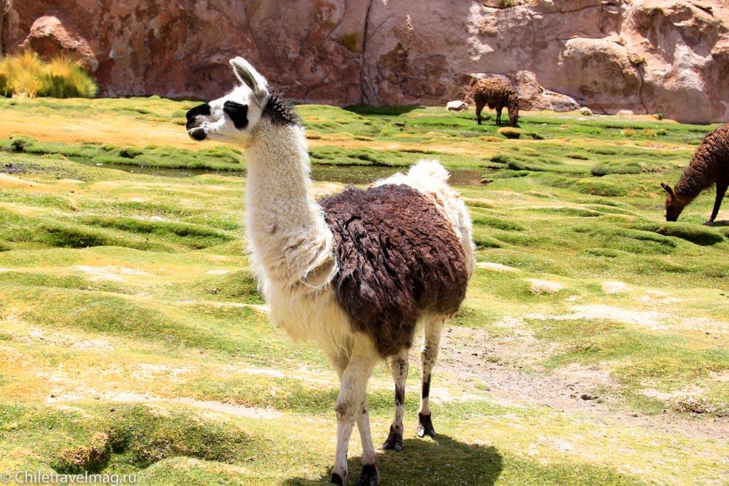 Valle de las Rocas поездка в Боливию отчет в блоге Chiletravelmag.ru -18