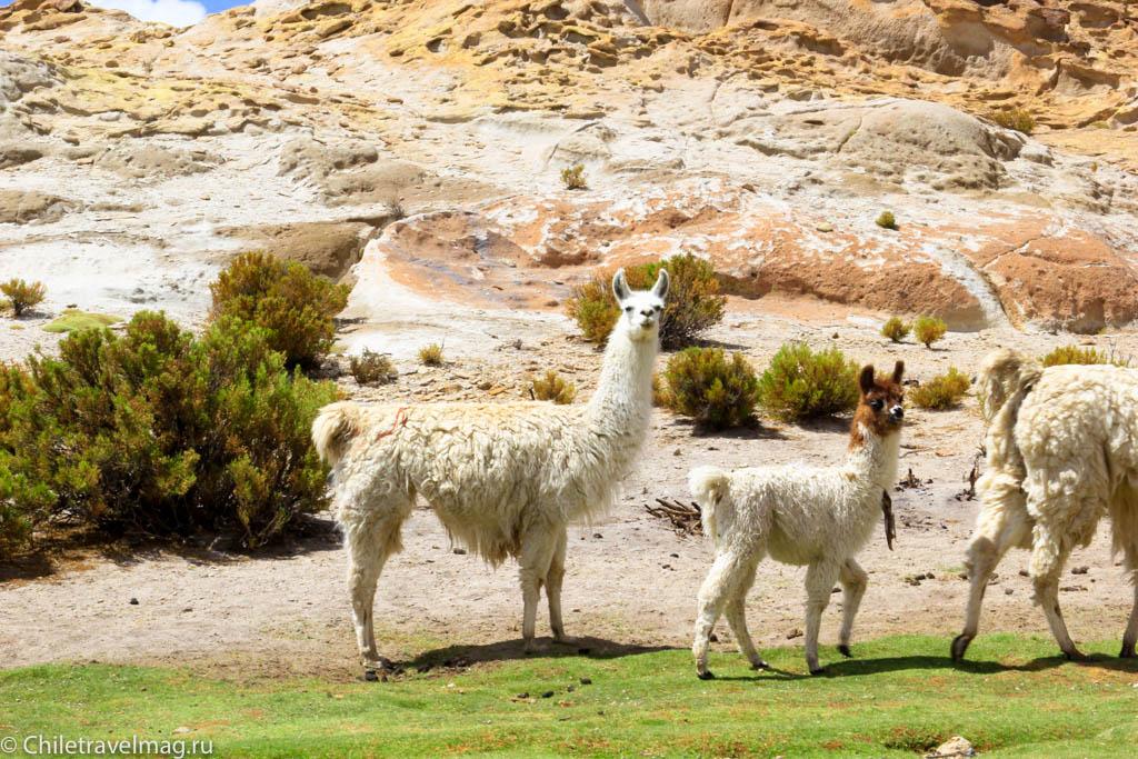 Valle de las Rocas поездка в Боливию отчет в блоге Chiletravelmag.ru -2
