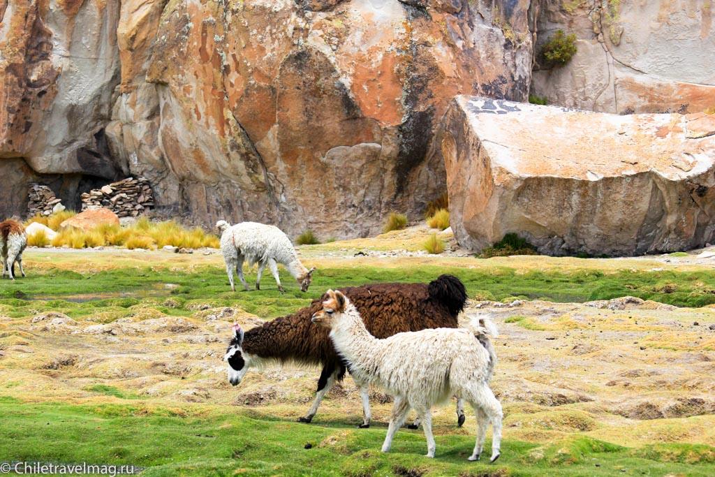Valle de las Rocas поездка в Боливию отчет в блоге Chiletravelmag.ru -21